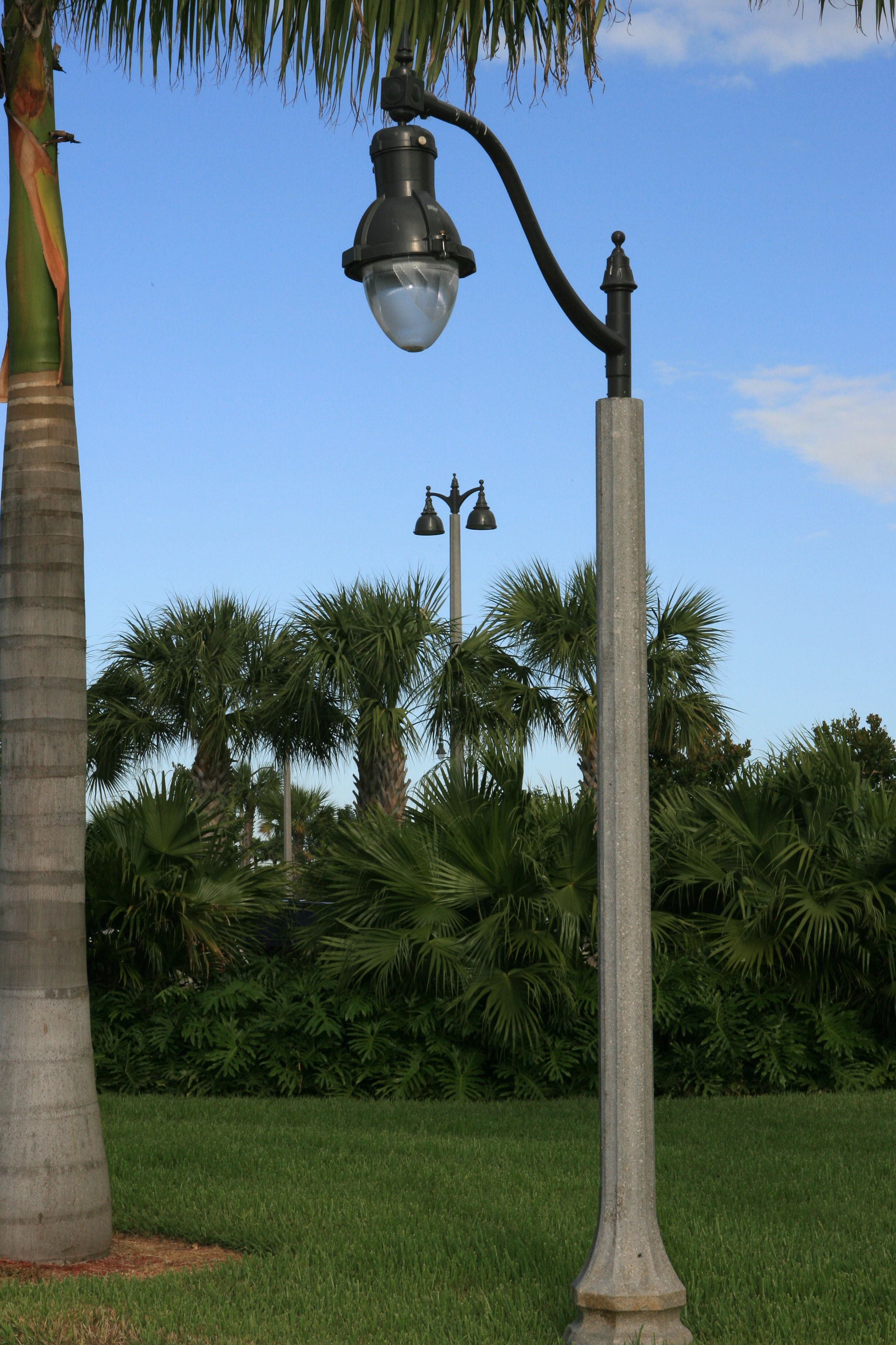 A street lamp next to a palm tree